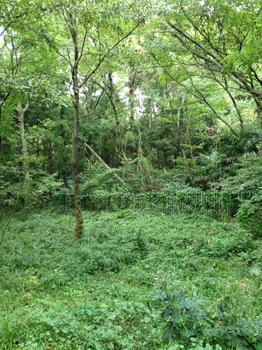 20121006_kokubunjigaisen.jpg